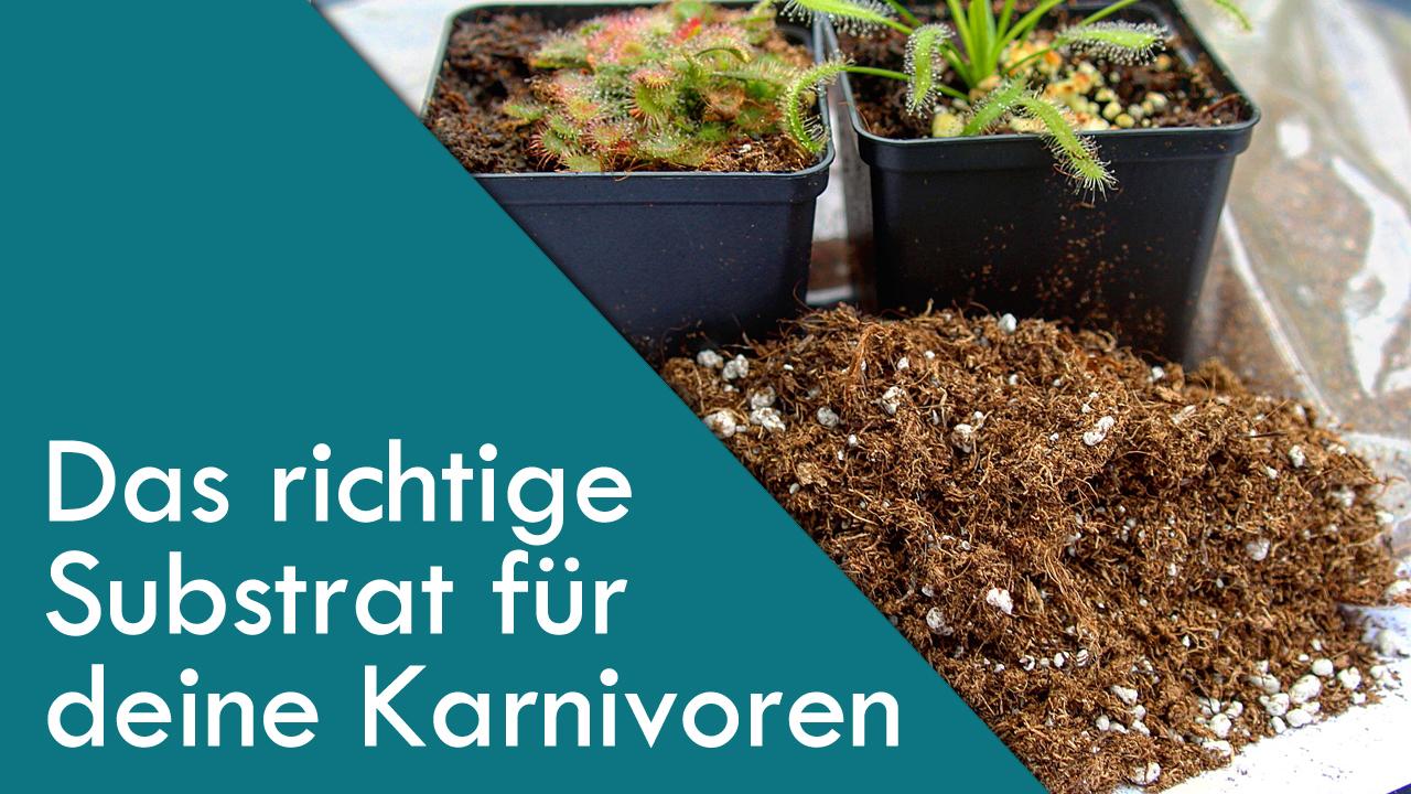 Das richtige Substrat für fleischfressende Pflanzen