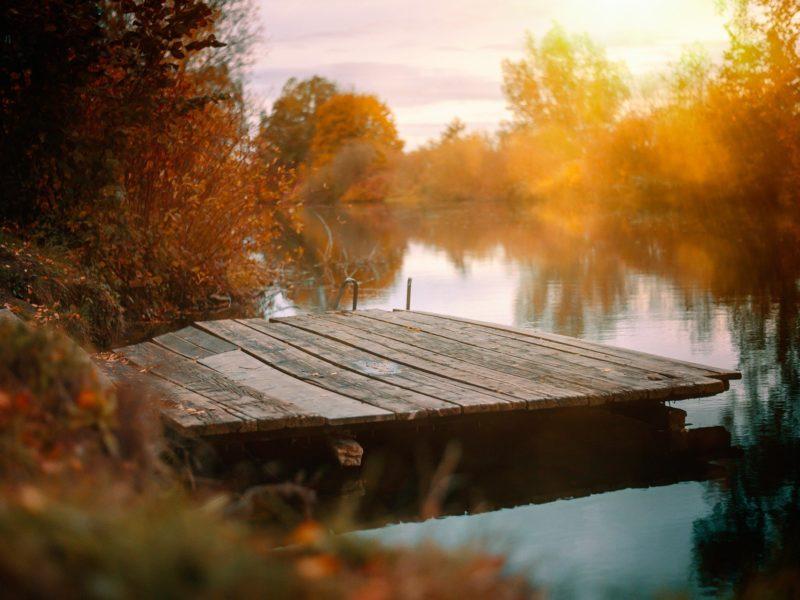 Der Herbst naht! Karnivoren einfach überwintern