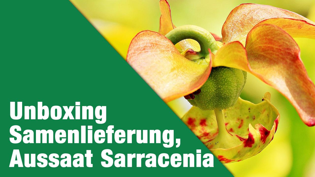 Unboxing Samenlieferung & Aussaat Sarracenia