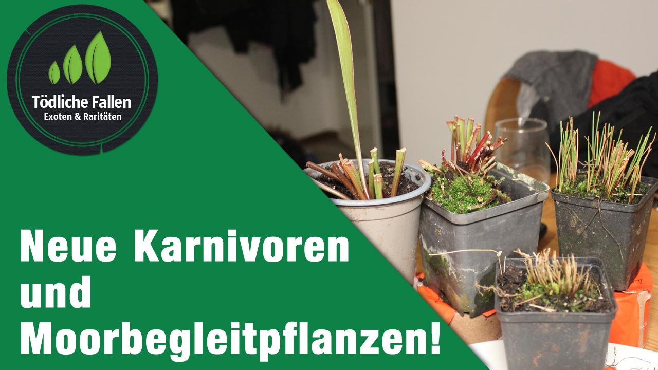 Neue Pflanzen, die Sammlung wächst!