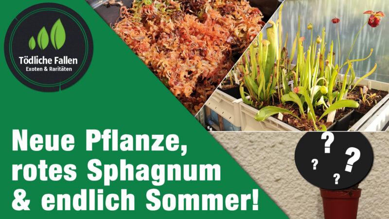 Der Sommer kommt und neue Pflanzen!