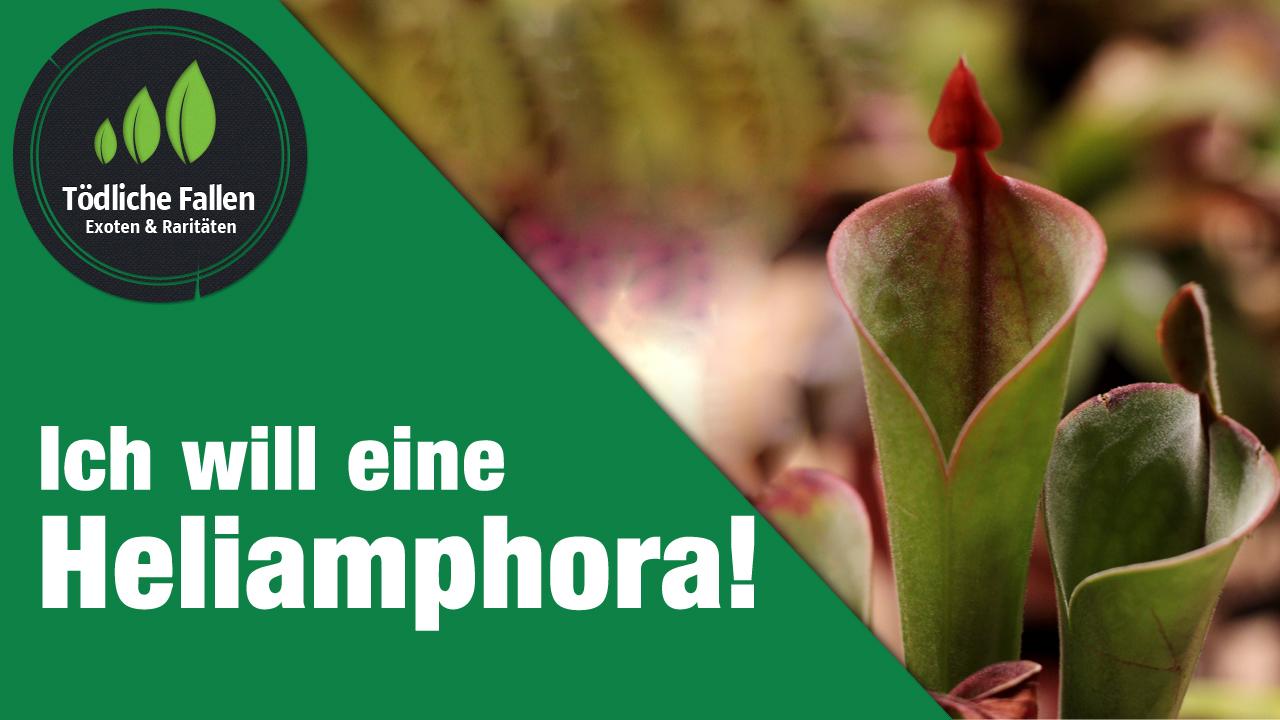 Ich will eine Heliamphora!